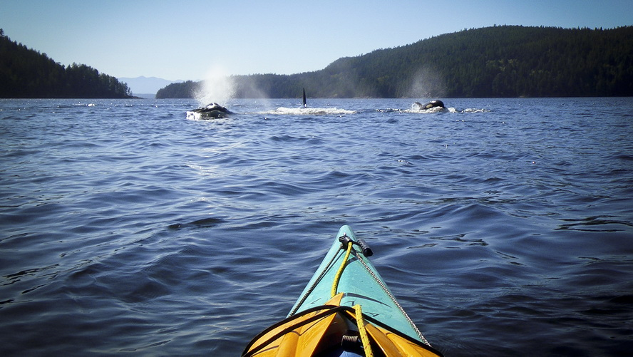 Multi day kayaking tour8