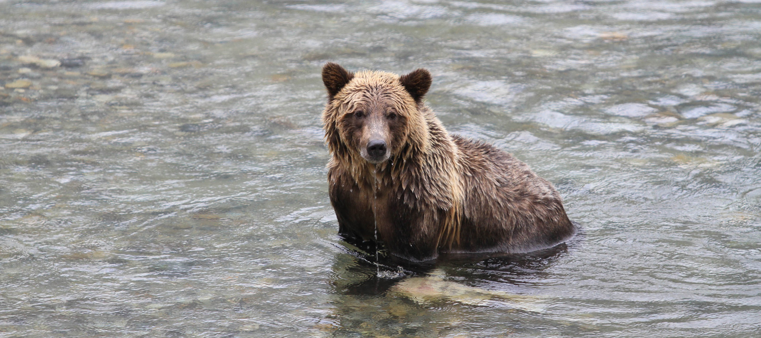 grizzly-bear-kayak-expedition1-2017