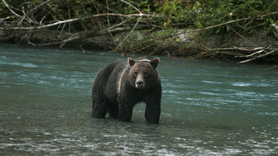 Grizzly-Kayak-Expedition7