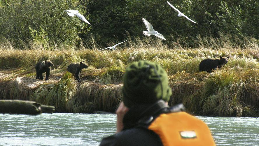 Multi day kayaking tour10